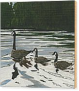 Canadas On Wilson Lake Nc Wood Print