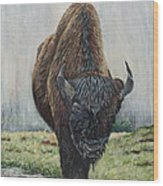 Canadian Bison Wood Print