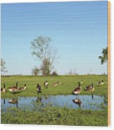 Canadian Geese Community In West Haven Wood Print