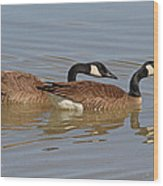 Canadian Geese Mates Wood Print