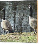 Canadian Geese On Spaulding Pond Wood Print