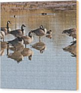 Canadian Geese Stop Over Wood Print