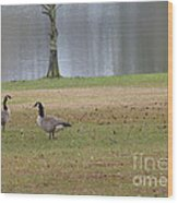 Canadian Geese Tourists Wood Print