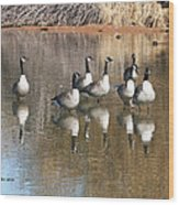 Canadian Geese Watching Wood Print