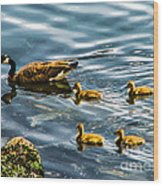 Canadian Goose And Goslings Wood Print