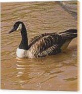 Canadian Goose In On Golden Pond Wood Print