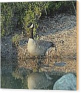 Canadian Goose Reflection Wood Print