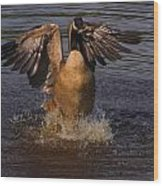 Canadian Goose Smooth Landing Wood Print