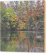 Canadian Goose Swimming Through The Autumn Reflections On The Pond Wood Print