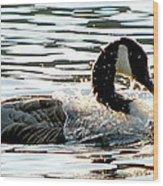Canadian Goose Wash Wood Print