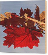 Canadian Maple Leaves In The Fall Wood Print