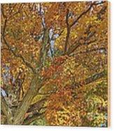 Canadian Tree 2012 Wood Print