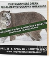 Canadian Wolves Wildcats And Wildlife Photography Workshop Wood Print