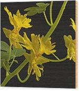 Canary Creeper Wood Print