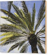Canary Island Date Palm Wood Print