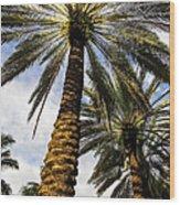 Canary Island Date Palms Wood Print