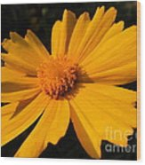 Canary Marigold Wood Print