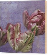 Cancan Parrot Tulips Wood Print