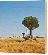 Candelabra Trees Wood Print