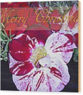 Candy Cane Flower-2 Wood Print
