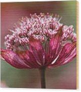Botanica .. Candy Wood Print
