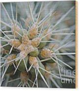Cane Cholla Cactus Spines Wood Print