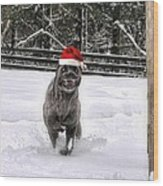 Cane Corso Christmas Wood Print