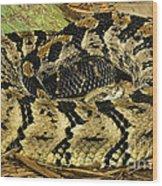 Canebrake Rattlesnake Wood Print