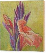 Canna Lily Wood Print by Janet Ashworth