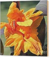 Canna Lily Named Wyoming Wood Print