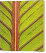 Canna Lily Red Stripe  Wood Print