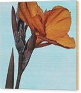 Canna X Generalis 'wyoming' Wood Print