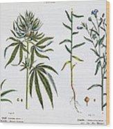 Cannabis And Flax Wood Print