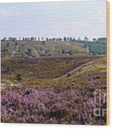 Cannock Chase Heather 4 Wood Print