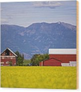 Canola Field Barn Wood Print