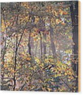 Canopy Collage Wood Print