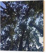 Canopy High Wood Print