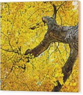 Canopy Of Autumn Leaves Wood Print