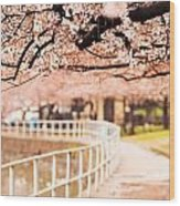 Canopy Of Cherry Blossoms Over A Walking Trail Wood Print