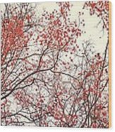 canopy trees II Wood Print by Priska Wettstein