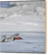Canvasback Duck On Ice Wood Print