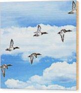 Canvasback Ducks In Flight Wood Print