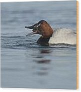 Canvasback On The Mussel Wood Print
