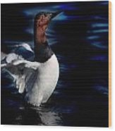 Canvasback Refold Wood Print