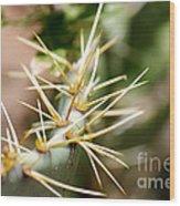 Canyon Cactus Wood Print