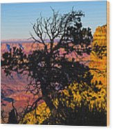 Canyon Tree Wood Print