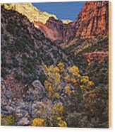 Canyons Of Zion At Autumn Wood Print