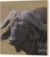 Cape Buffalo   #0607 Wood Print