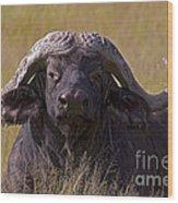 Cape Buffalo   #0609 Wood Print