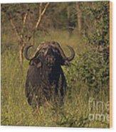 Cape Buffalo   #6851 Wood Print